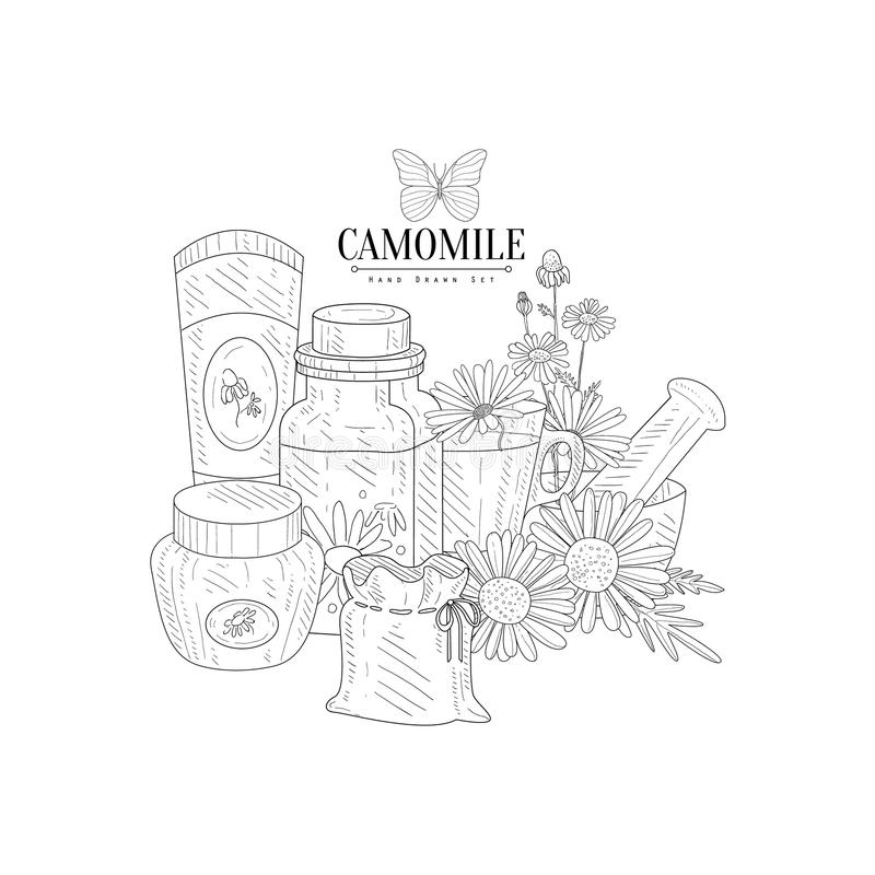 Camomile Natural Product Hand Drawn Realistic Sketch royalty free illustration