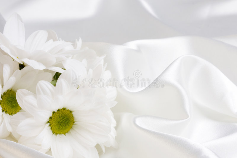 Camomile and silk. White camomile and white silk royalty free stock photos