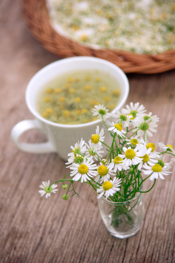 Camomile tea. Camomile flowers and whithe cup of tea on wooden surface royalty free stock images
