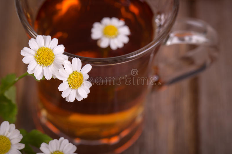 Download Camomile tea stock image. Image of lifestyle, glass, herbal - 32553225