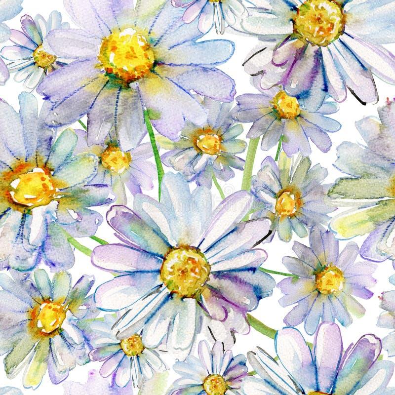 Camomile Watercolor λουλούδια ελεύθερη απεικόνιση δικαιώματος