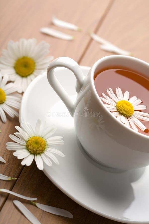 camomilekoppen blommar växt- tea royaltyfri fotografi