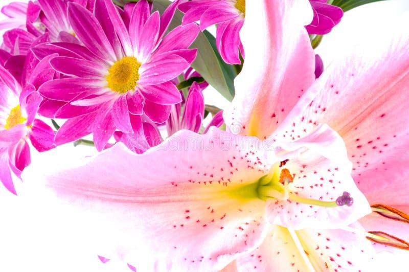 Camomiles. Flores da mola fotos de stock