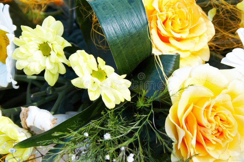 Download Camomiles and roses stock photo. Image of closeup, camomile - 6277170