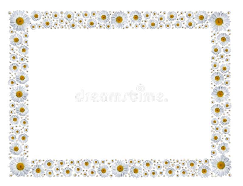 camomilesram royaltyfri illustrationer