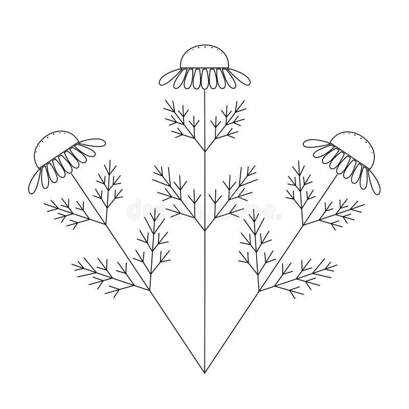 Camomilla, illustrazione disegnata a mano floreale di vettore dell'incisione del fiore della camomilla Fiore bianco su bianco illustrazione di stock