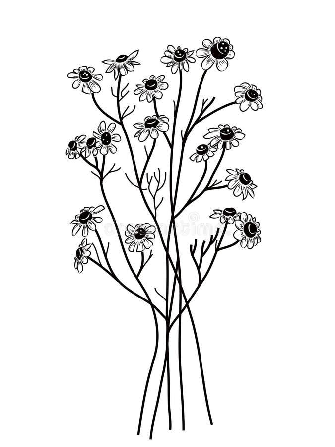 Camomille illustration de vecteur