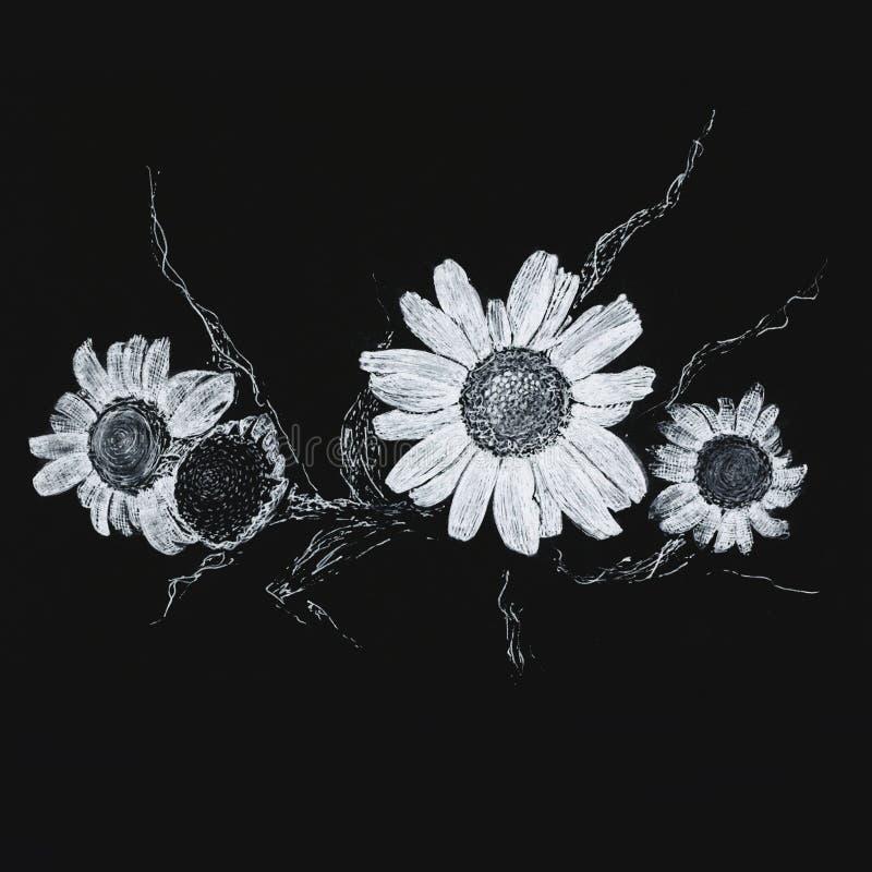 Camomille en encre blanche sur un fond noir photos stock