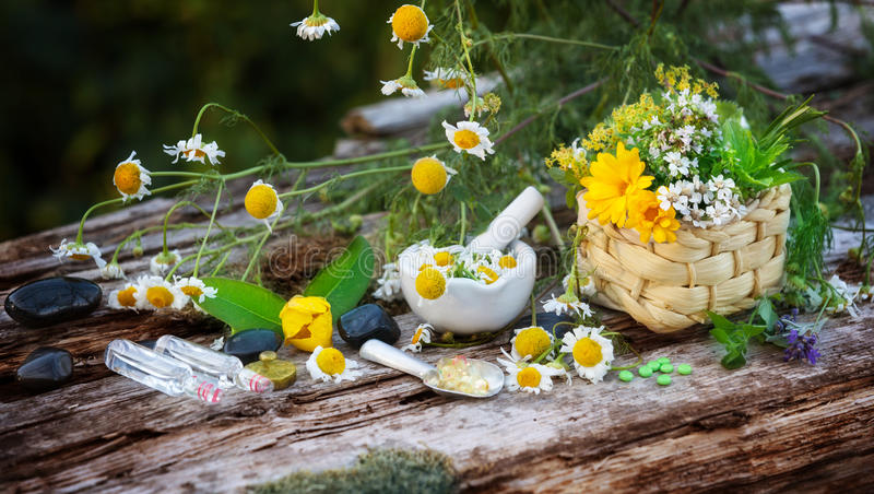 Camomille, plantes médicinales, homéopathie photos stock
