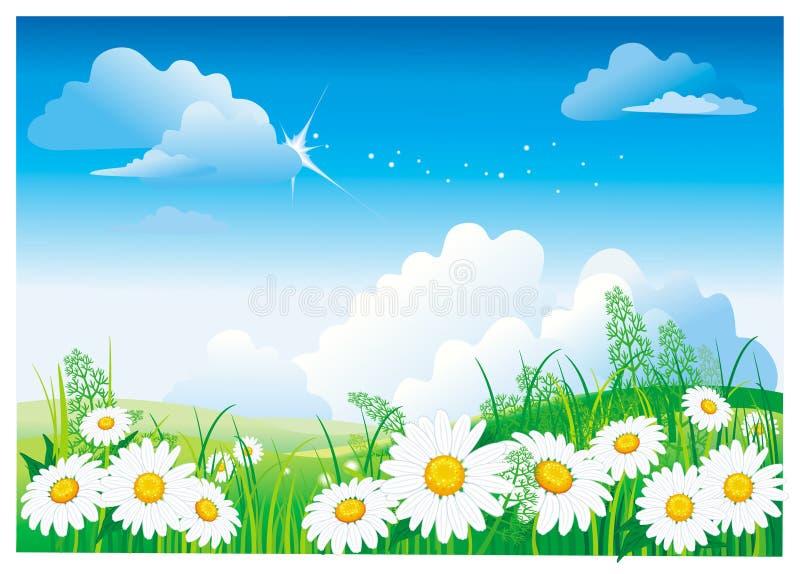 Camomille sur le ciel bleu. illustration libre de droits