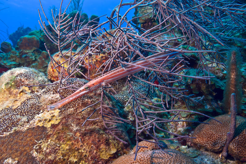 Download Camouflage stock photo. Image of hiding, camouflage, fish - 26109306