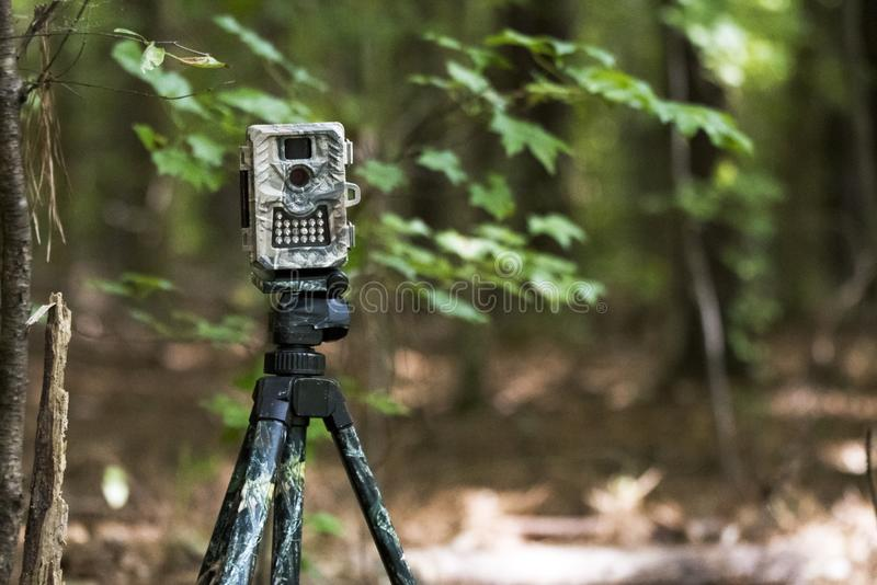 Camouflage game trail camera trap set in the woods. Camouflage trail camera set on a tripod in the woods by a hunter. Remote game trail camera is a motion sensor stock photos