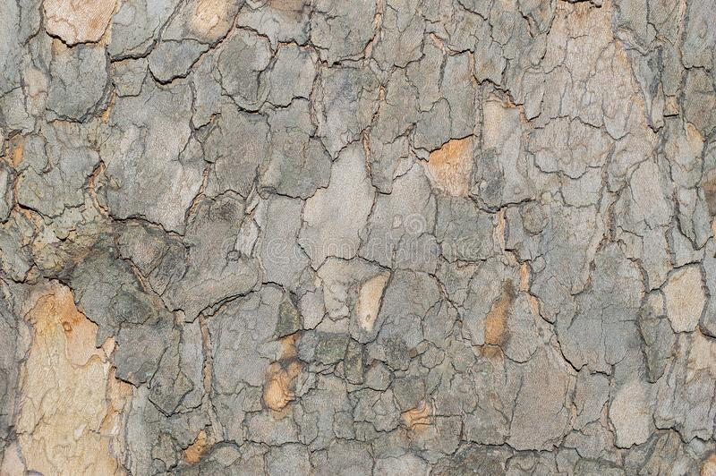 Camouflage pattern like Sycamore Platunus tree bark.  royalty free stock images