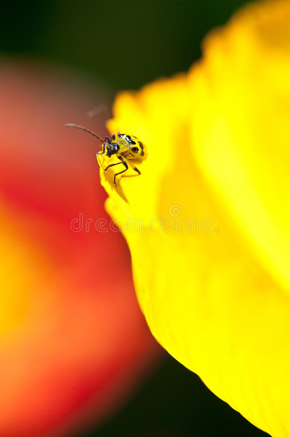 Camouflaged yellow insect royalty free stock photography