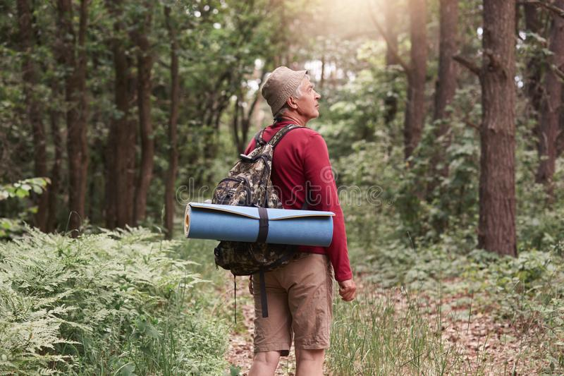 Camp, adventure, traveling, active recreation concept. Eldery man with backpack and rug hiking in forest, standing among trees in stock photos
