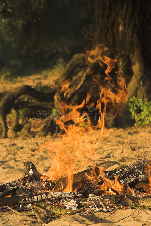 Camp fire in Forest royalty free stock photography