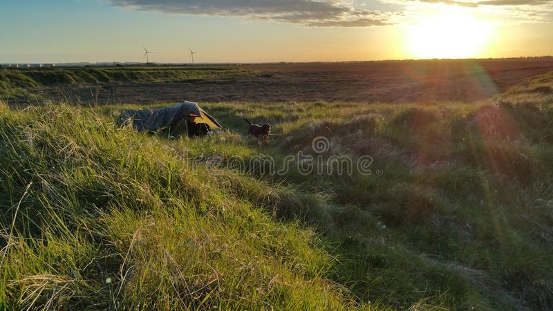 Camp sauvage avec le chien de Charlie photographie stock libre de droits