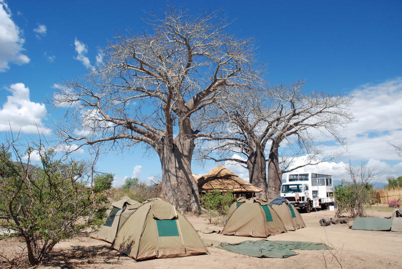 Camp under an African baobab tree. (Adansonia digitata) with Overlandtruck and tents, Malawi, Africa Adansonia digitata royalty free stock photography