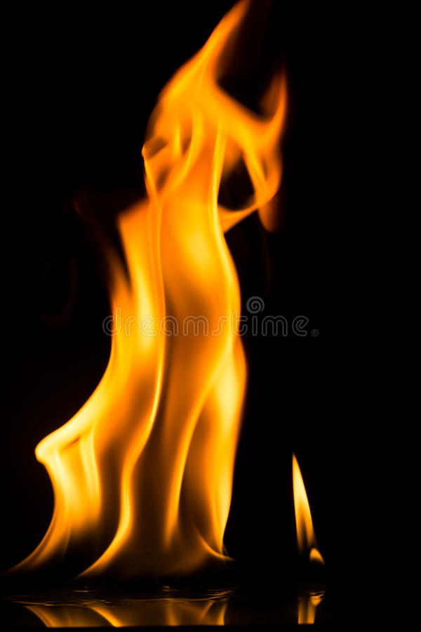 campa brandflammaskog arkivfoto