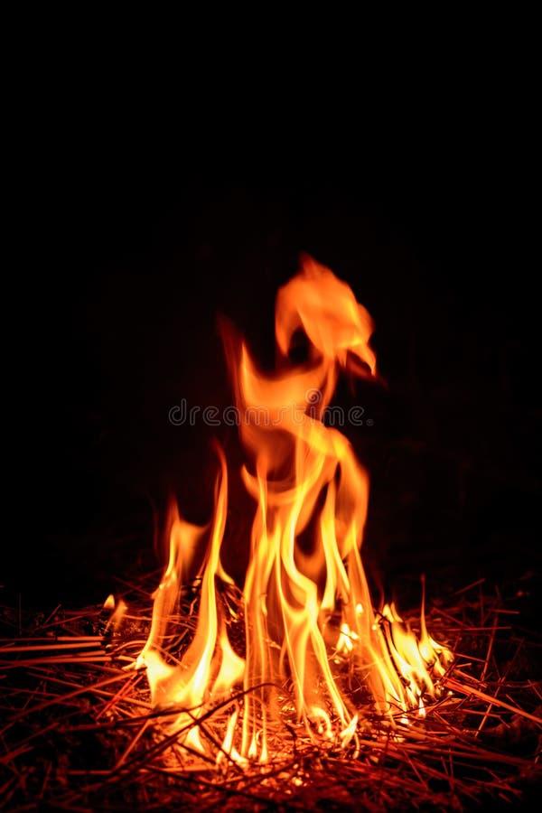 campa brandflammaskog arkivbild