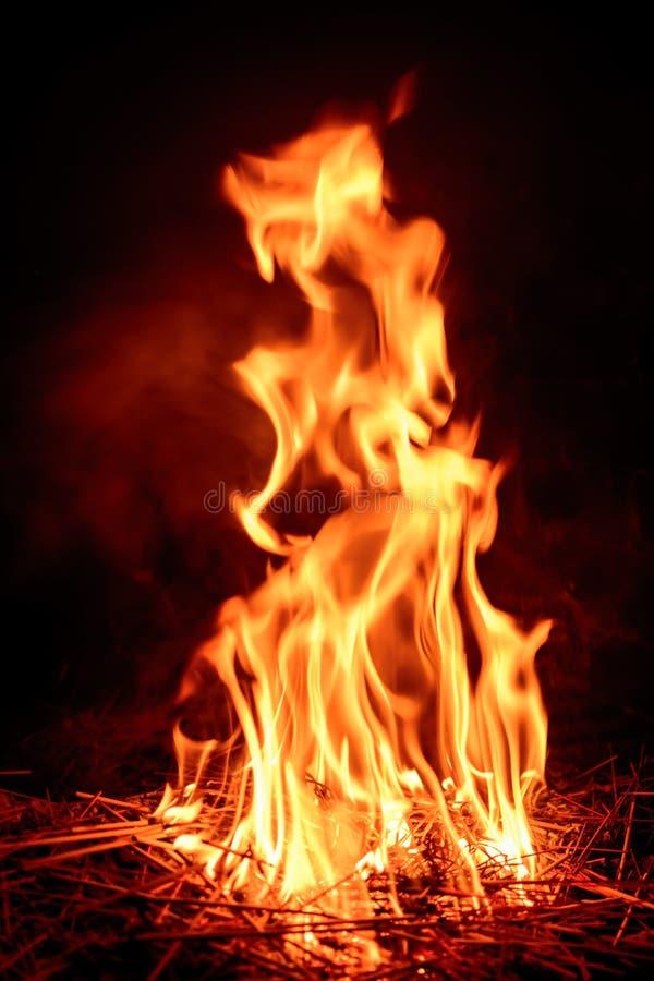 campa brandflammaskog royaltyfria bilder