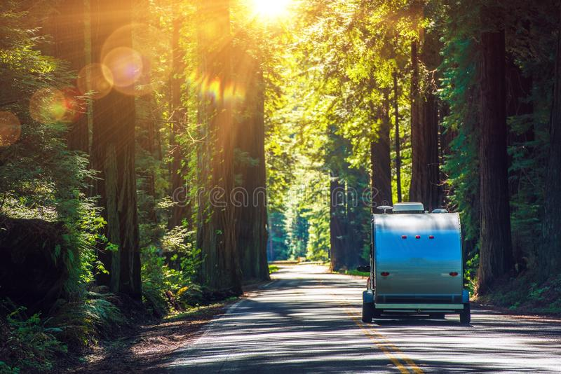 Campa i redwoodträd fotografering för bildbyråer