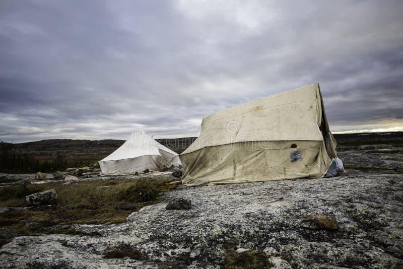 Campa i tundra2en arkivfoto