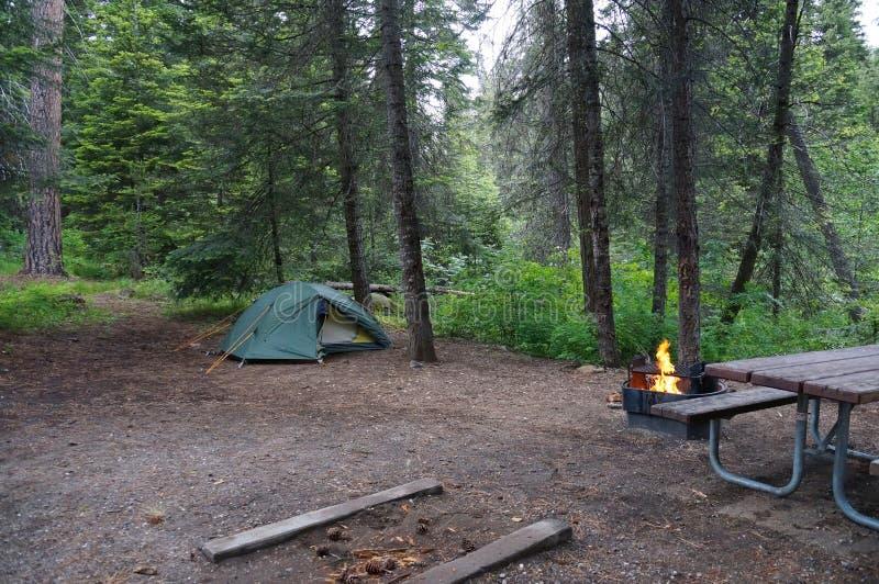 Campa med brand och tältet i en lös skog arkivbild