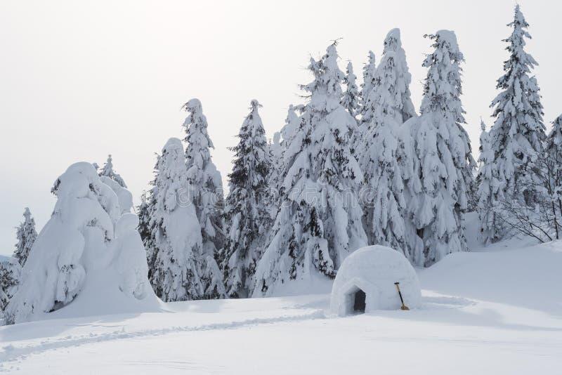 Campa med igloo i snön royaltyfria bilder