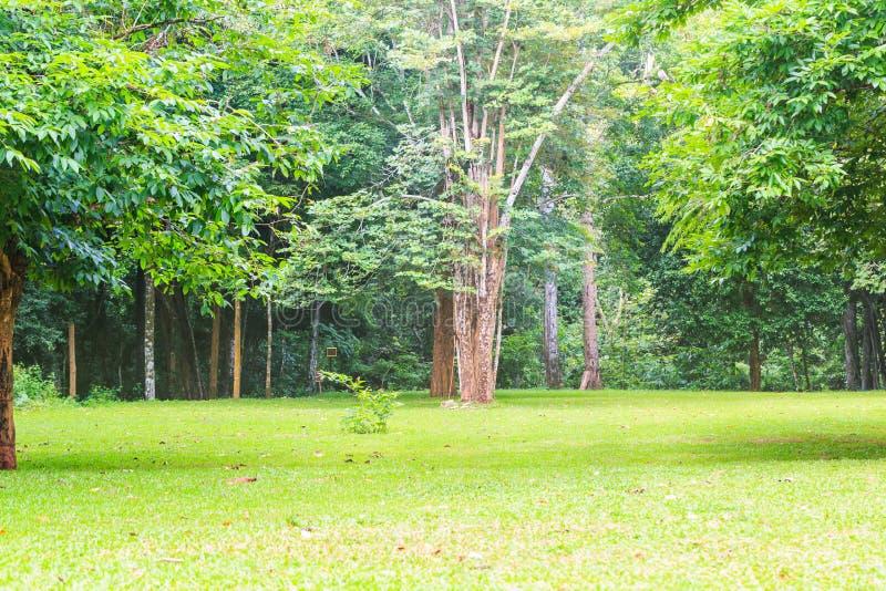 Campa område för tält royaltyfri foto