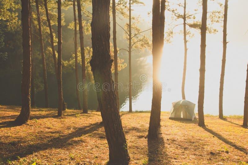 Campa på Pang Tong Under Royal Forest Park arkivbild