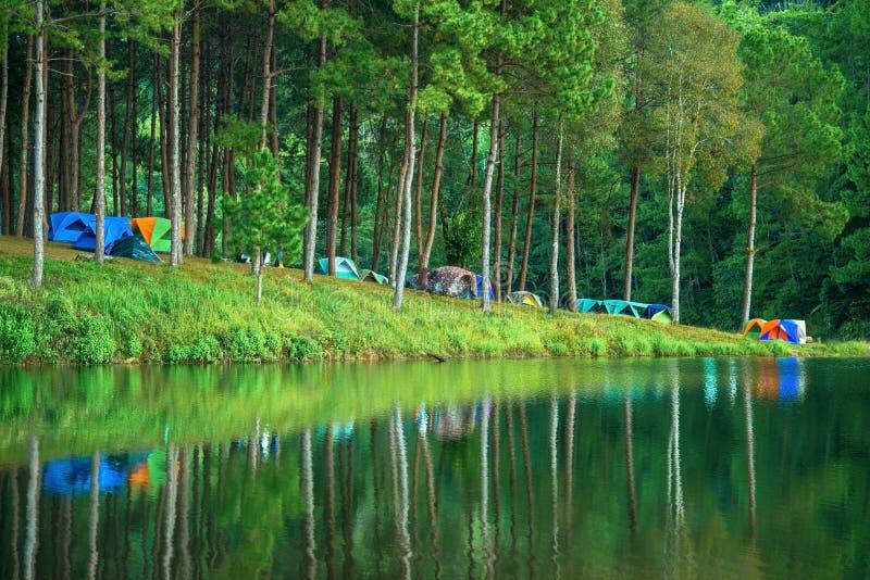 Campa på sting Ung Härlig skoglake i morgonen Mae Hon landskap royaltyfri fotografi