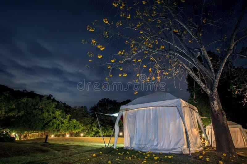 Campa tält för afrikansk safari och härlig blå natthimmel royaltyfri bild