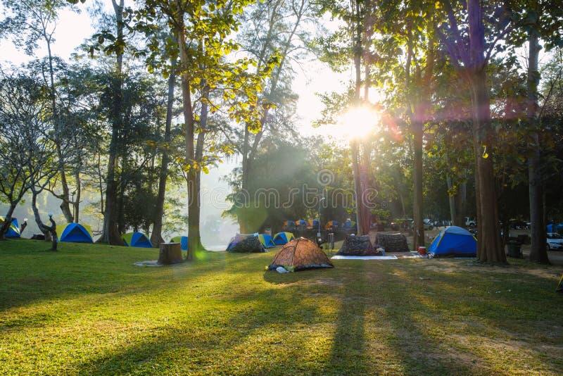 Campa tält i gräsmattan med solljusmorgon royaltyfria foton