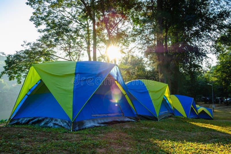 Campa tält i gräsmattan med soluppgångmorgon royaltyfri fotografi
