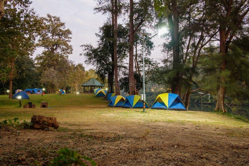 Campa tält i gräsmattan till natten av skogen arkivfoto