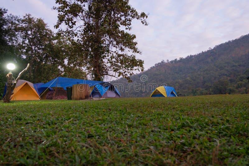 Campa tält i gräsmattan till natten av skogen arkivbilder
