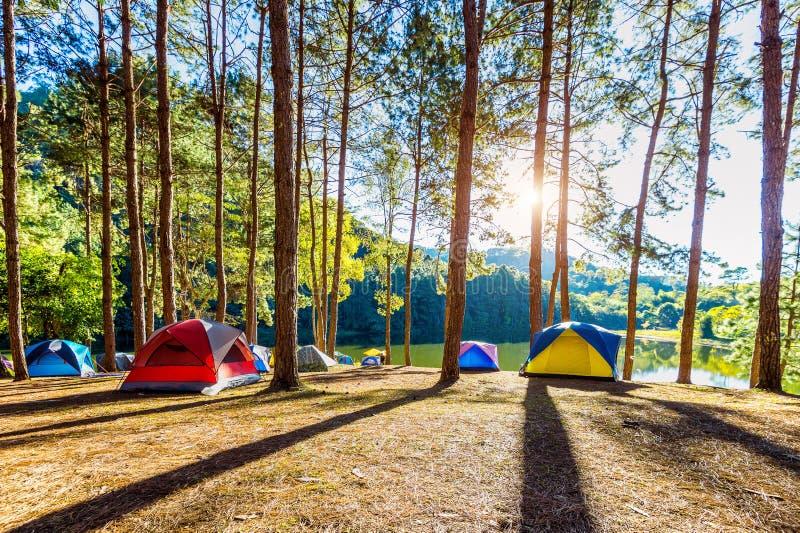 Campa tält sörjer under träd med solljus på Pang Ung sjön, Mae Hong Son i THAILAND royaltyfria foton