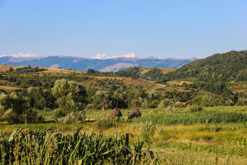 Campagna in Banat, Romania immagine stock libera da diritti