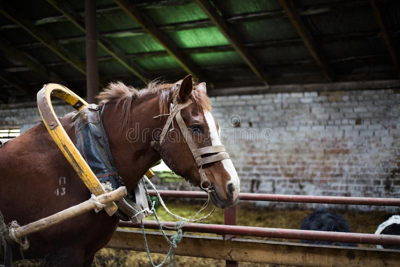 Campagna, Bielorussia, azienda agricola fotografia stock libera da diritti