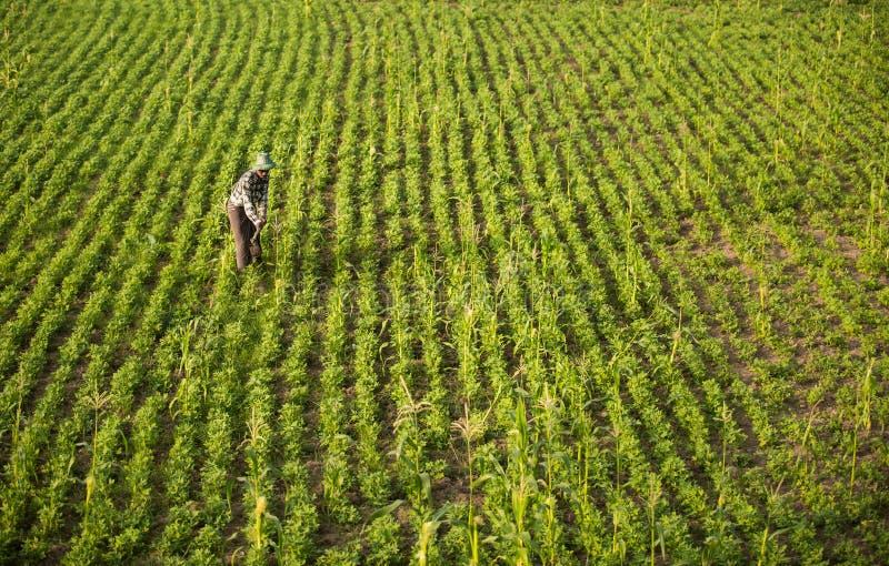 Campagna del Myanmar fotografie stock libere da diritti