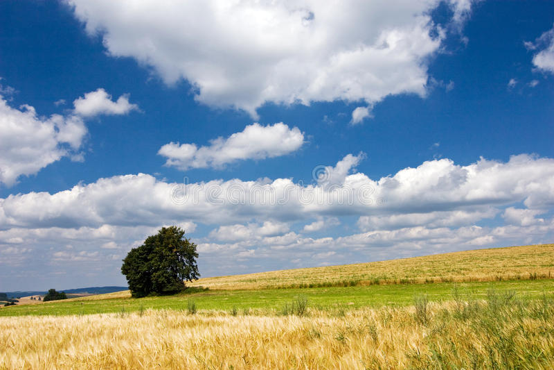 Campagna di estate con l'albero del solitaire fotografia stock libera da diritti