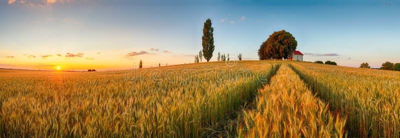 Campagna di panorama del giacimento di grano di estate, agricoltura immagine stock libera da diritti