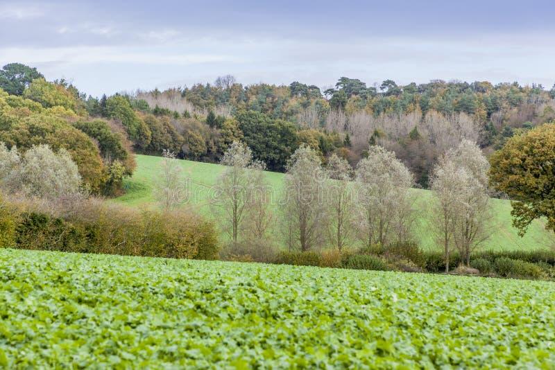Campagna inglese durante l'autunno con gli alberi immagine stock libera da diritti