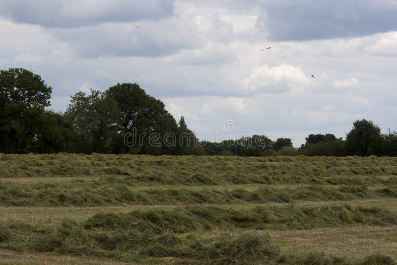 Campagna inglese, verde di Holmer, Buckinghamshire immagine stock libera da diritti