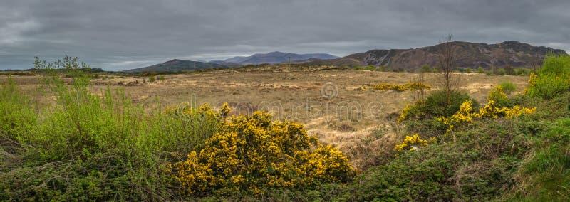 Campagna irlandese rurale fotografie stock