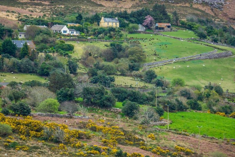 Campagna irlandese rurale fotografie stock libere da diritti