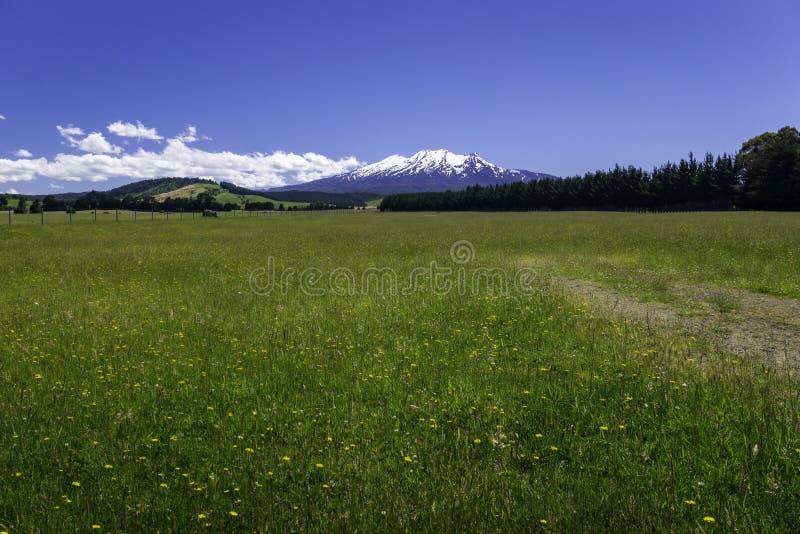 Campagna Ohakune della Nuova Zelanda fotografia stock