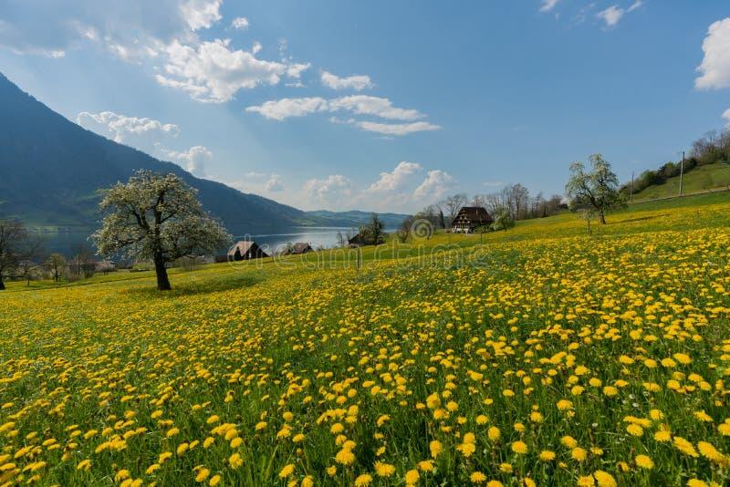 Campagna svizzera idilliaca con l'azienda agricola tradizionale in una regolazione del paesaggio della montagna e del lago fotografia stock