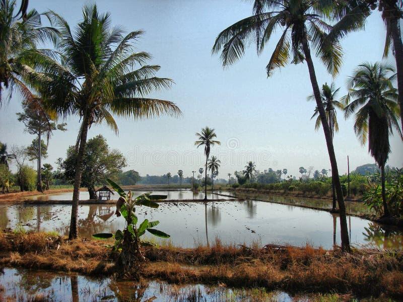 Campagna in Tailandia, Asia immagine stock